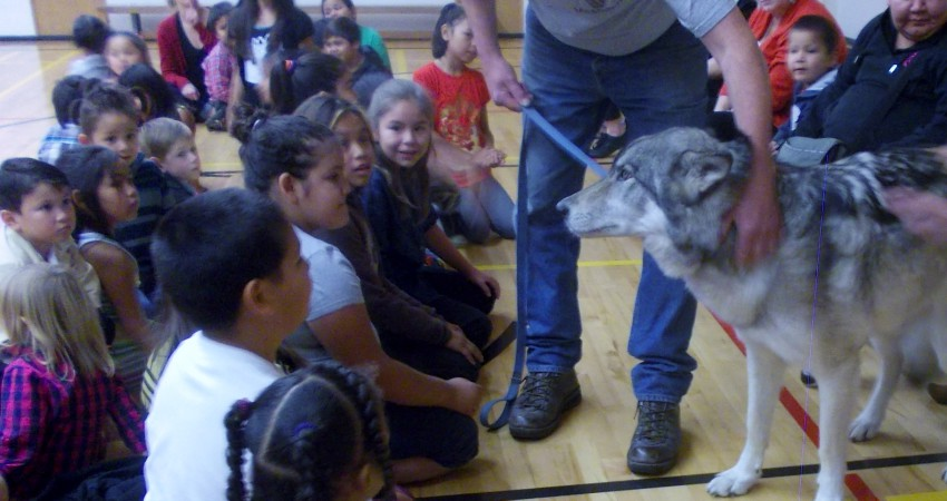 Tundra the wolf visits Craigflower – – October 15, 2016
